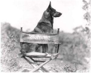 animali più pagati Rin Tin Tin